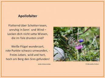 Gedicht Apollofalter / Text: L. Wintersteller, @ A. Weber
