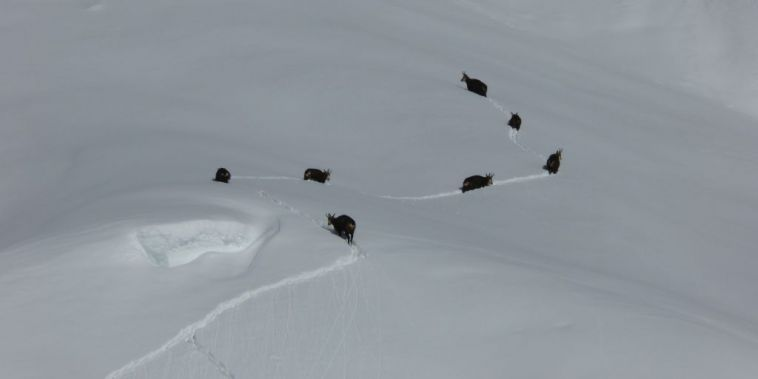 Wintersport und Wildtiere