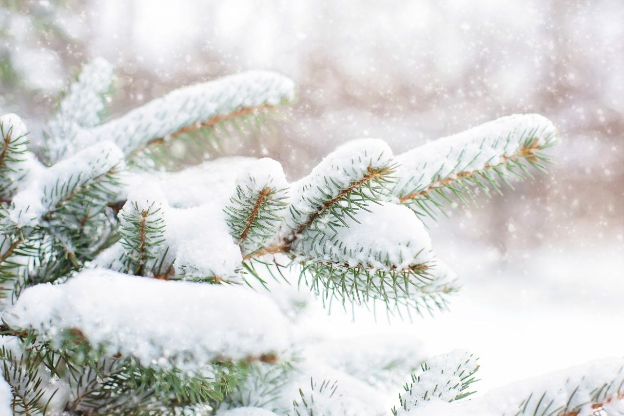 bild /vorarlberg_wAssets/img/newsletter/snow-in-pine-tree-1265119_1920.jpg